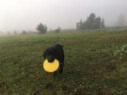 Egyéni tréning kölyökkutyáknak MEGNÉZEM