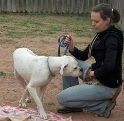Egyéni tréning felnőtt kutyáknak MEGNÉZEM